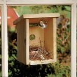 2790383_birdhouse9